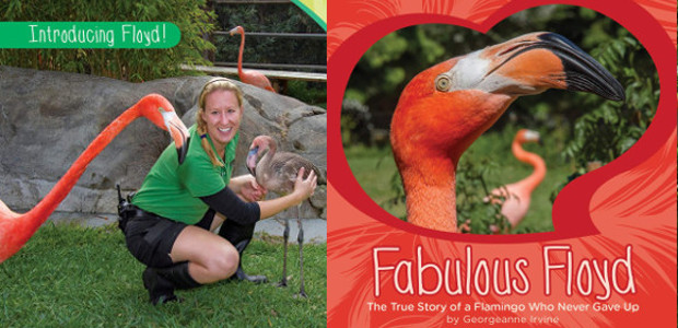 BOOK > From San Diego Zoo >> Fabulous Floyd: The True Story of a Flamingo Who Never Gave Up Hardcover by Georgeanne Irvine. On Amazon! > www.amazon.co.uk/Fabulous-Floyd-Story-Flamingo This is the […]
