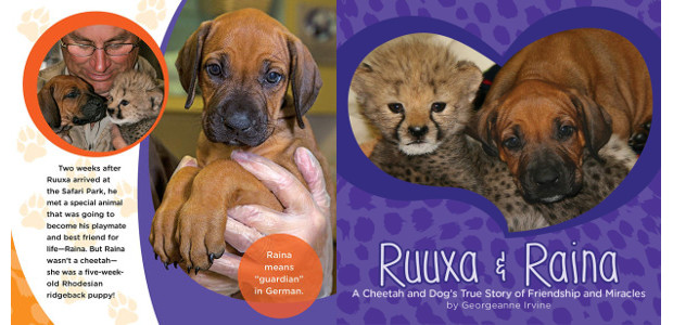 BOOK! From San Diego Zoo >> RUUXA & RAINA: a Cheetah and Dog's True Story of Friendship and Miracles — This is a tale about two best friends and two […]
