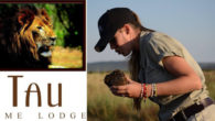 Paying it forward with travel… at Tau Game Lodge in the Madikwe Reserve, South Africa. Book two nights or more and stand a chance to win an extra night of […]