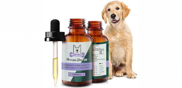 Dogs Experience Stress Just Like You See more and buy @ :- www.amazon.com/Calming-Stress-Anxiety-Joints-Inducing/dp/B07ZZB2FS6 These days many people think of their four-legged friends as part of the family. And, just like […]